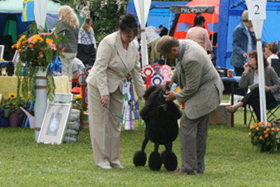 Swedisch Poodle Show 2010